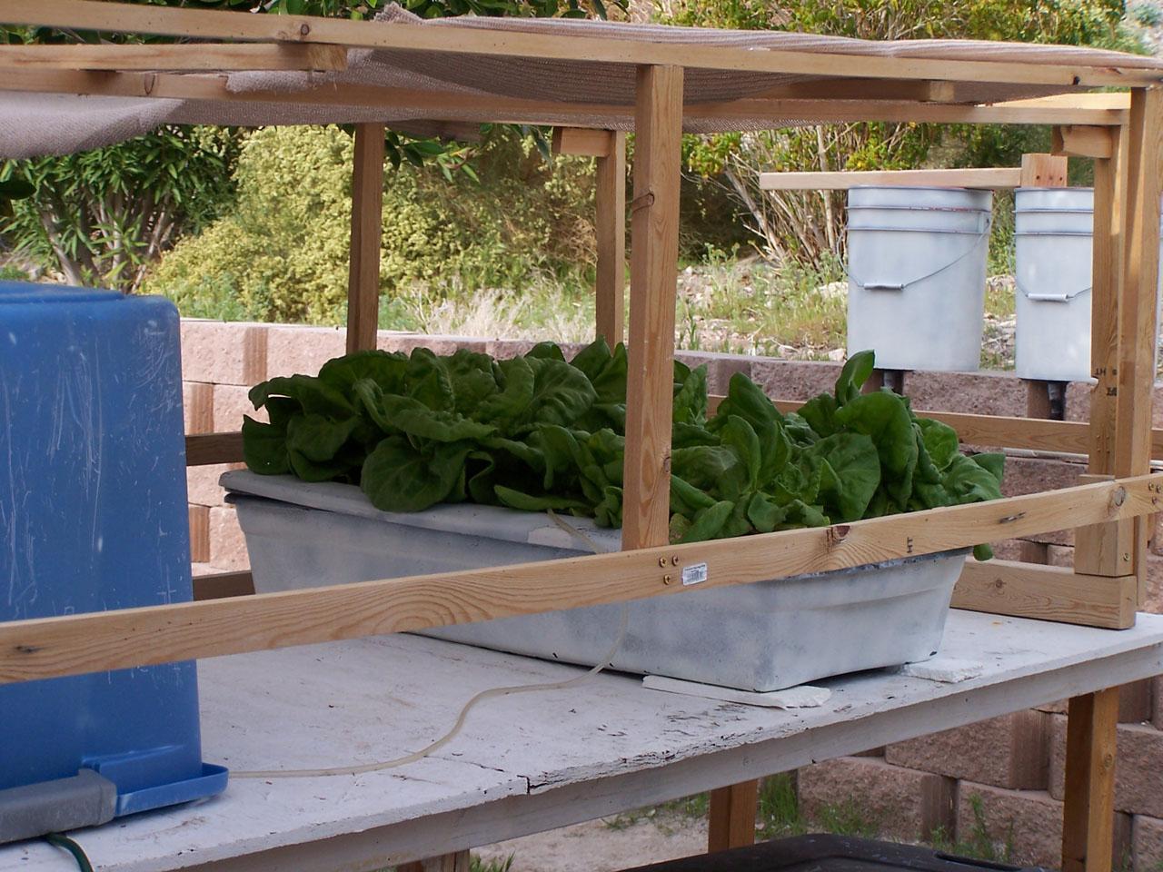 На подобной установке очень хорошо выращивать салаты.  Хотя впрочем, любое растение, хорошо переносящее большое...