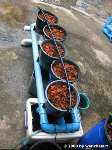 Coconut Coirs used as hydroponic growing medium