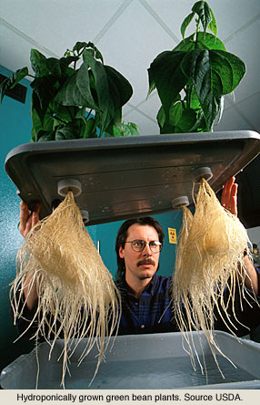 Keeping Hydroponic Roots Healthy Hydroponics Blog