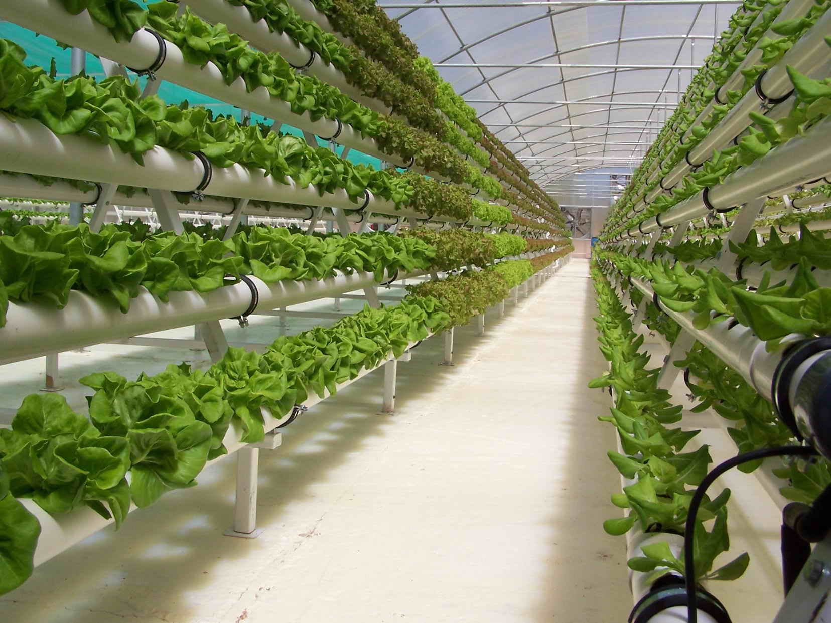 What s the big deal about hydroponics hydroponics blog hydroponics articles hydroponics - Colture idroponiche in casa ...