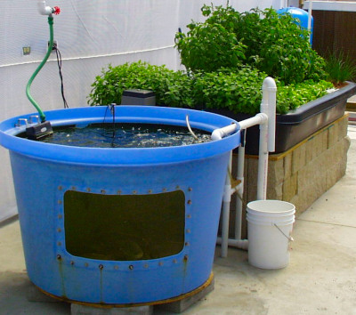 Aquaponics or hydroponics hydroponics blog hydroponics for Aquaponics fish for sale