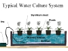 Typical Water Culture System